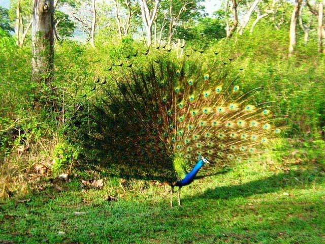 Best Tourist Places In Mudumalai Tamil Nadu