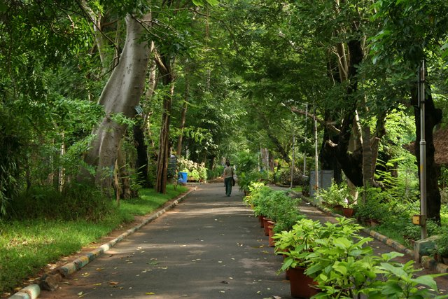 Botanical Garden in Pondicherry
