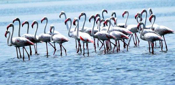 Pulicat Lake From Chennai