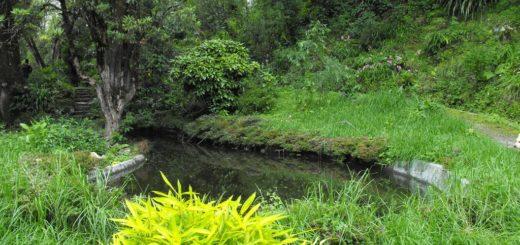 Llyod's Darjeeling