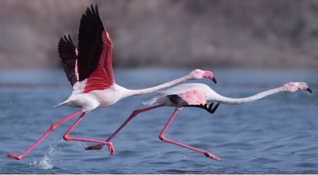 Best Birdwatching Tours In India Rann of kutch