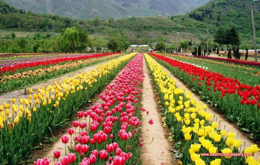Top 10 Beautiful Gardens In India Famous Gardens In