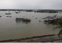 Sundarbans CN