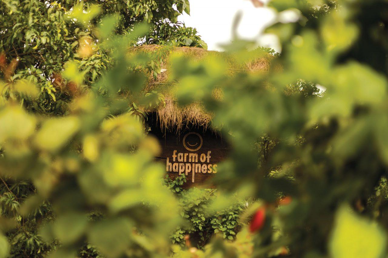 Hyundai Verna Travel Farm of Happiness