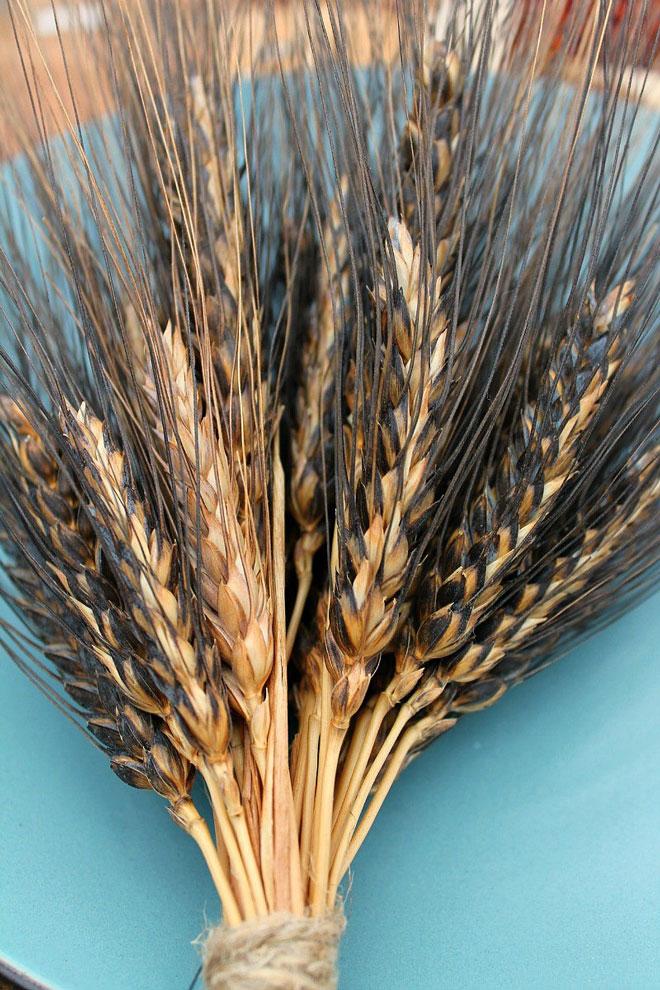 lie on black wheat