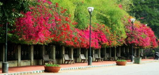 My first visit to bangalore
