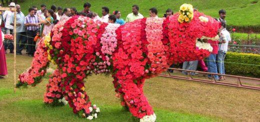 Ooty Flower Festival