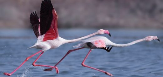 Best Birdwatching Tours In India Rann of kutch