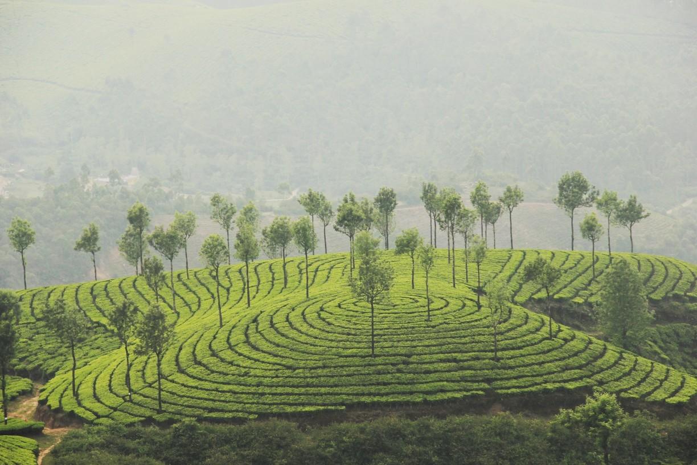 Kanan Devan Hills Plantation in Kerala