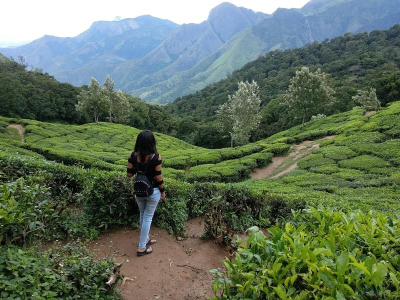 Backpacking Trip To Munnar