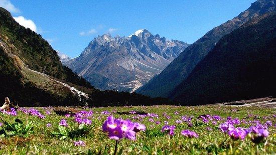 Himalayas Region Yumthung Valley