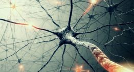 Understanding and coding Neural Networks From Scratch in Python and R