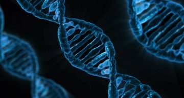 Introduction to Genetic Algorithm & their application in data science
