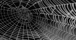 Web Scraping in Python using Scrapy (with multiple examples)