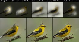 Microsoft's New AI Bot can Draw Images Based on Captions