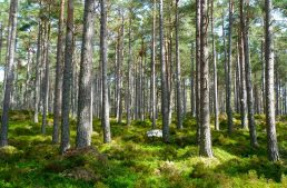 An Introductory Guide to Regularized Greedy Forests (RGF) with a case study in Python