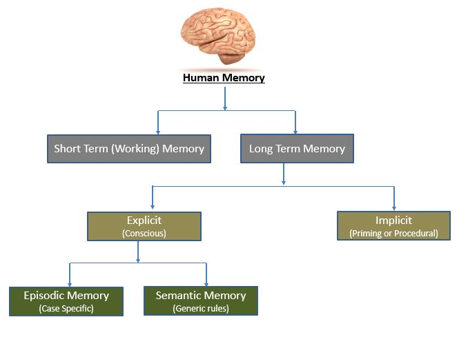in understanding how our brain stores all the information it gets from  all sensory organs  following is a simplistic view of how humans store data: