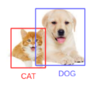 cat and dog: object detection