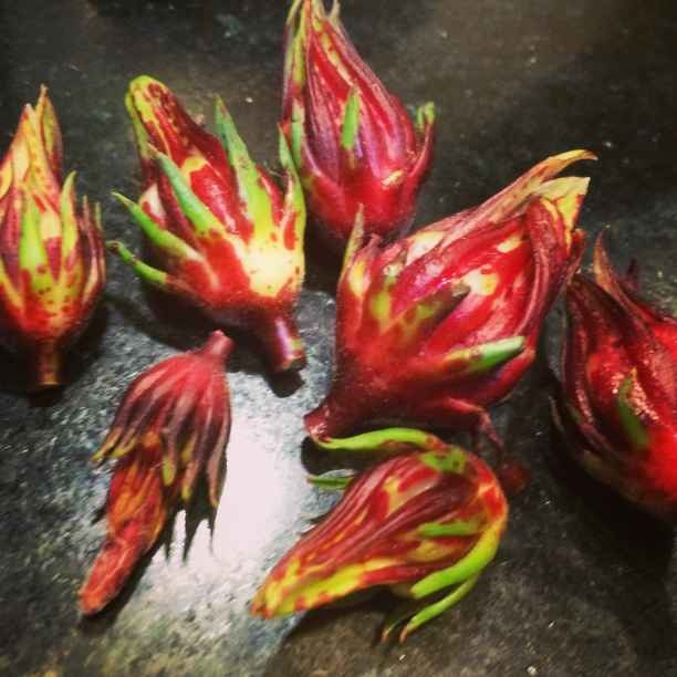 Photo of GONGURA FLOWERS PICKLE by Pranavee Ganti at BetterButter