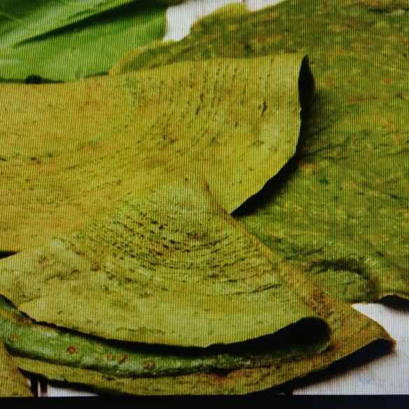 Photo of Palak dosa by Samiksha Mahadik at BetterButter