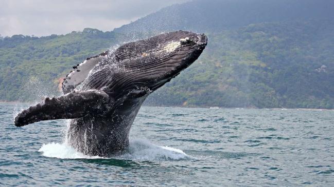 F:\whale.jpg
