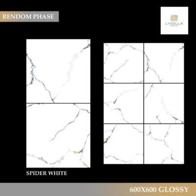 600x600 Glossy SPIDER WHITE