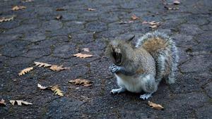 Squirrel cat 1902688 1920