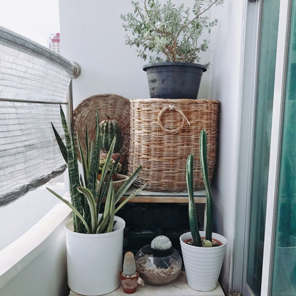 A small balcony design with a modern design with pots of cactus which shows balcony garden ideas india