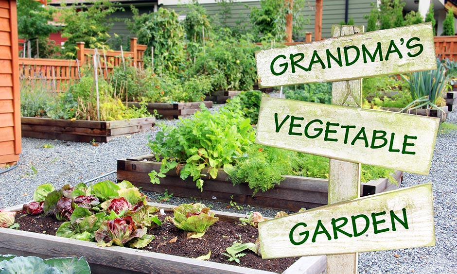 Home garden design pictures with home made vegetable garden has separate veggie patches created using spare wood