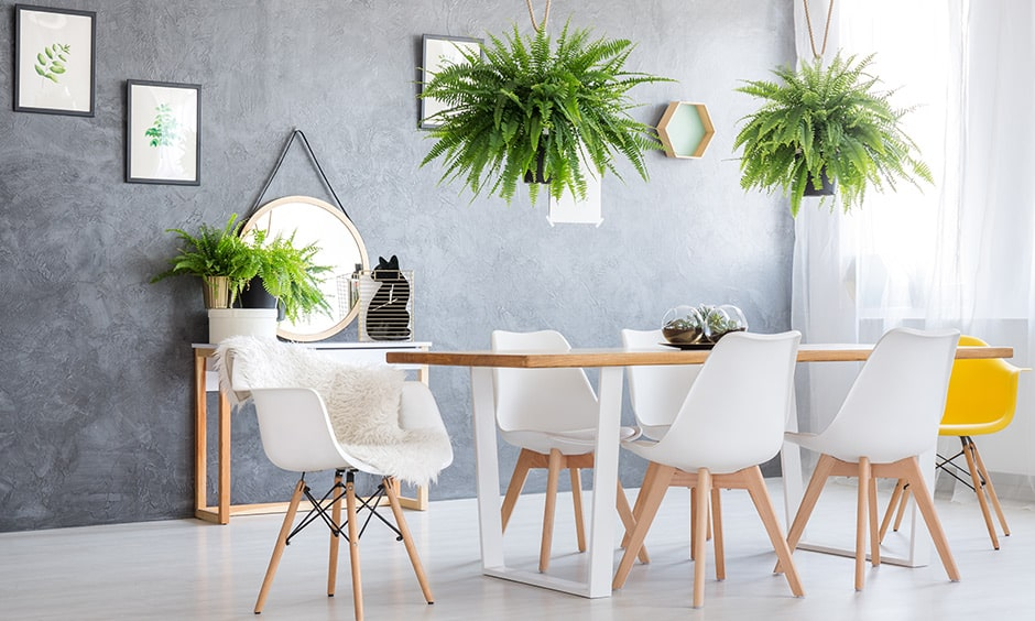 Indoor hanging plants for dining room, these are the newest trend and the idea for indoor hanging plants