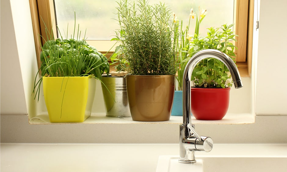 Home garden plants are part of home interior design trends after coronavirus/covid-19