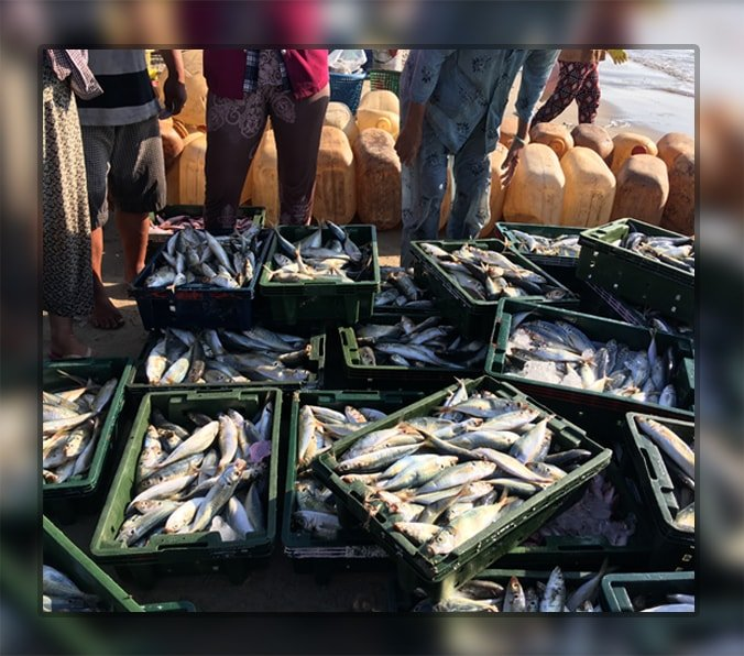 Fish Farming Business ideas for 2019