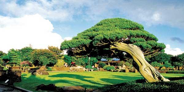 Spirited-garden