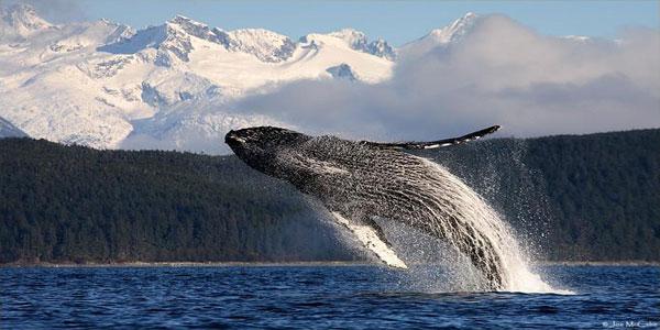 whale-watchin-2