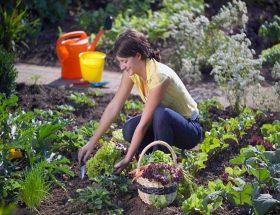 ऐसे उगाएं घर में फल और सब्जियां