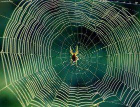 मकड़ी के जालें हटाने के आसान तरीके