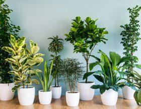 गर्मियों में इन पौधों से घर को रखें ठंडा ठंडा कूल कूल