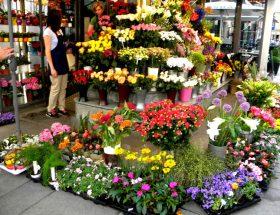 फूलों के गुलदस्तें को रखें फ्रेश