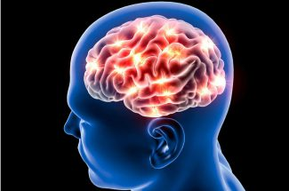 excess fat may shrink your brain