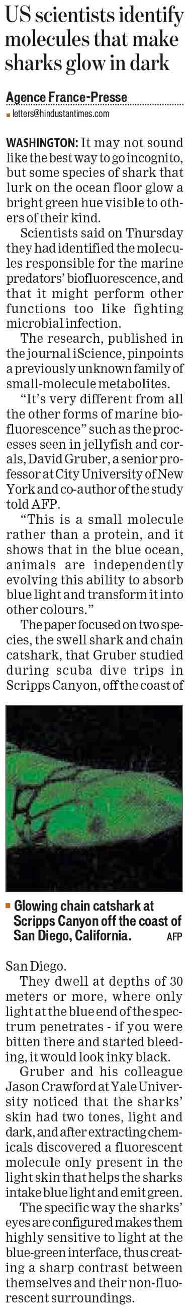 US scientists identify molecules that make sharks glow in dark