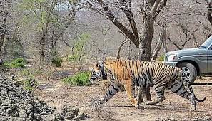 National Tiger Conservation Authority Has Qualms About Mining in Palamu