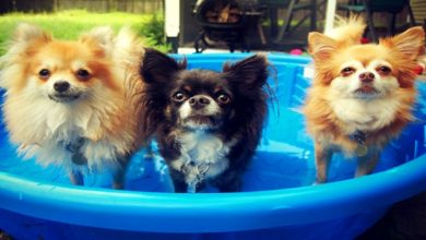 Photo of B-Town's Pet Parents Gear Up For A 'Paw-rful' Summer