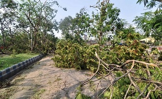 Photo of Goa Body Opposes Cutting Of 50,000 Trees For Central Projects