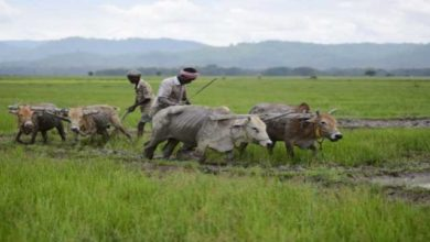 Photo of Big Farm Push Expected In First Budget Of Modi 2.0