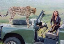 Photo of When Karisma Kapoor Shared Screen Space With Cheetah