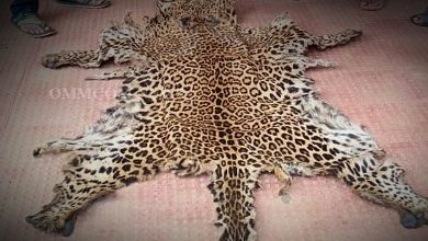 Photo of Leopard Skin Seized In Chhattisgarh, One From Odisha's Sinapali Arrested
