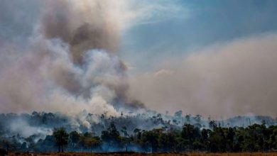 Photo of Big Increase Recorded In Amazon Fires