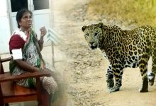 Photo of Odisha: Leopard Attack In Sundergarh, 4 Injured