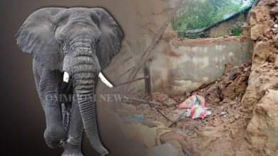 Photo of Wall Collapse Kills Elderly Woman After Elephant Attack In Jharsuguda