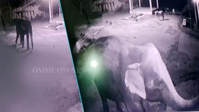 Photo of Odisha: CCTV Captures Elephant's Midnight Stroll In Dhenkanal Village
